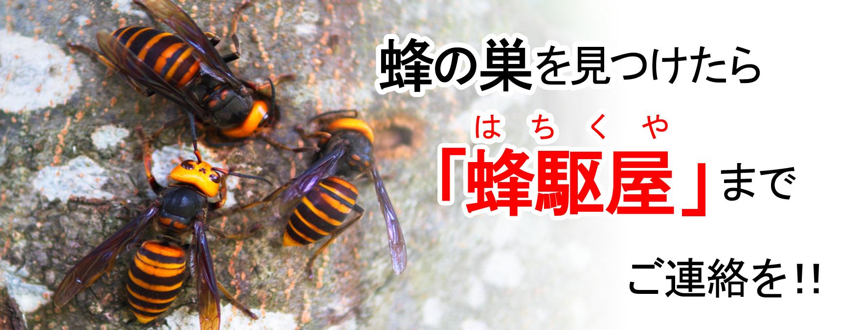 蜂の巣を発見したら蜂駆屋まで写真