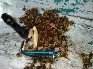 8月初旬・キイロスズメバチと全面戦争・ベランダ~1階軒天内に大きな巣の駆除-3