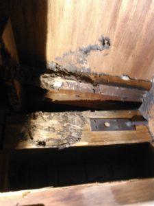 8月中旬・流山市内・平屋の軒下から侵入、屋根裏にキイロスズメバチ巣の駆除-2