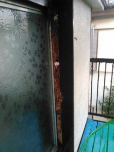 9月中旬・野田市内・アパートの戸袋いっぱいのモンスズメバチの巣駆除-2
