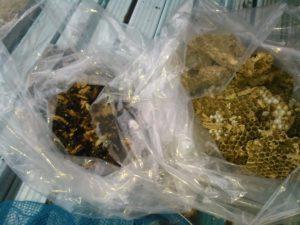 9月中旬・野田市内・アパートの戸袋いっぱいのモンスズメバチの巣駆除-8