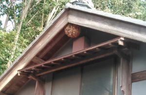 9月下旬・野田市内・2階軒下に大きなキイロスズメバチの巣駆除 -1